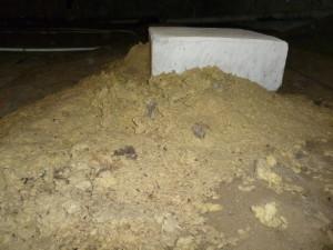 Large mouse nest