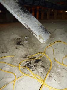 Osorous ant damage to insulation