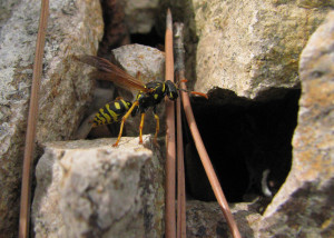 Wasp looking at a...
