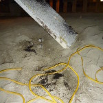 Osorous ant damage to insulation