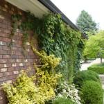 showing foliage touching home